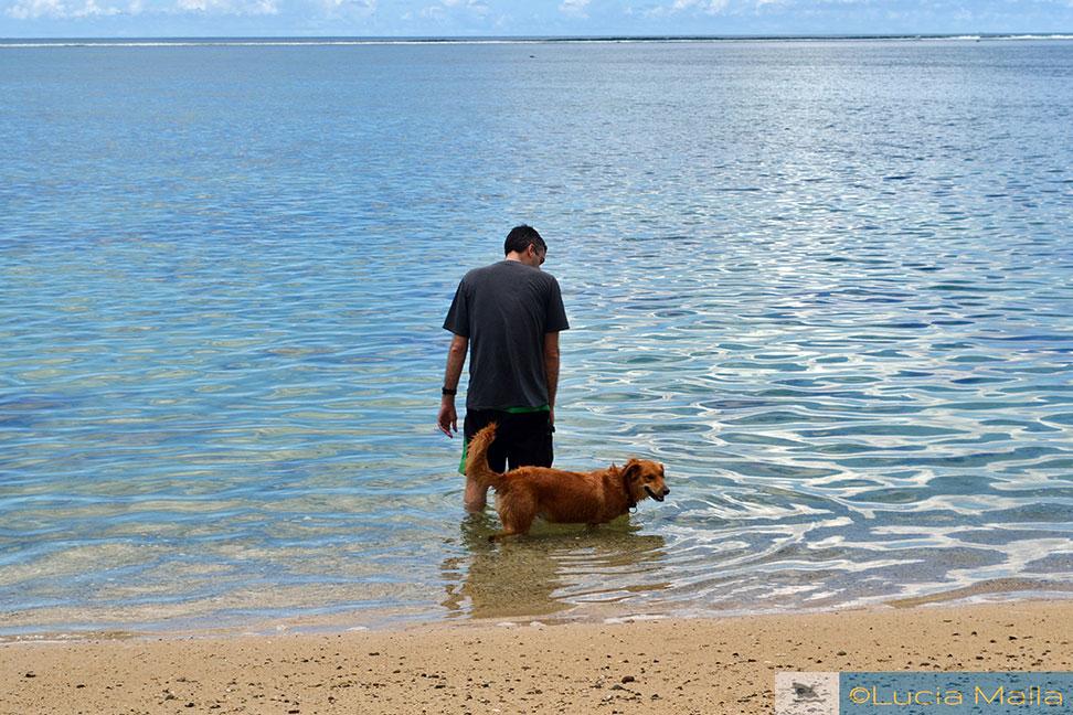 Cachorro - melhor amigo fijiano