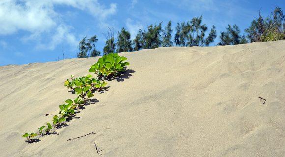 Parque nacional fijiano: Dunas de Sigatoka