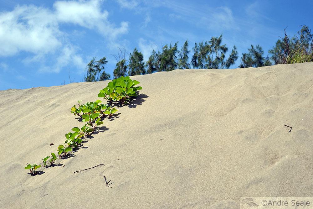 Areia das dunas de Sigatoka - Fiji