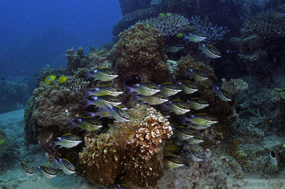 Mergulho em Noumea - Nova Caledônia - Seche Croissant