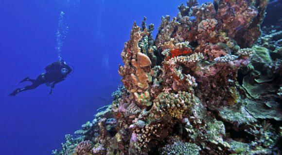 Sexta Sub: mergulho em Noumea, Nova Caledônia