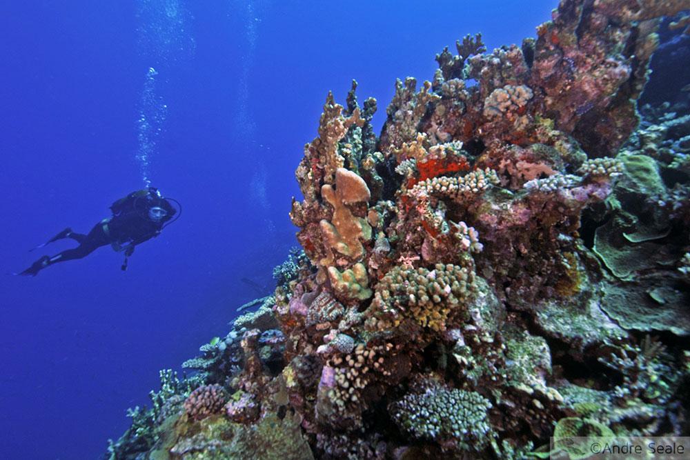 Mergulho no Dumbea Pass - Noumea - Nova Caledônia