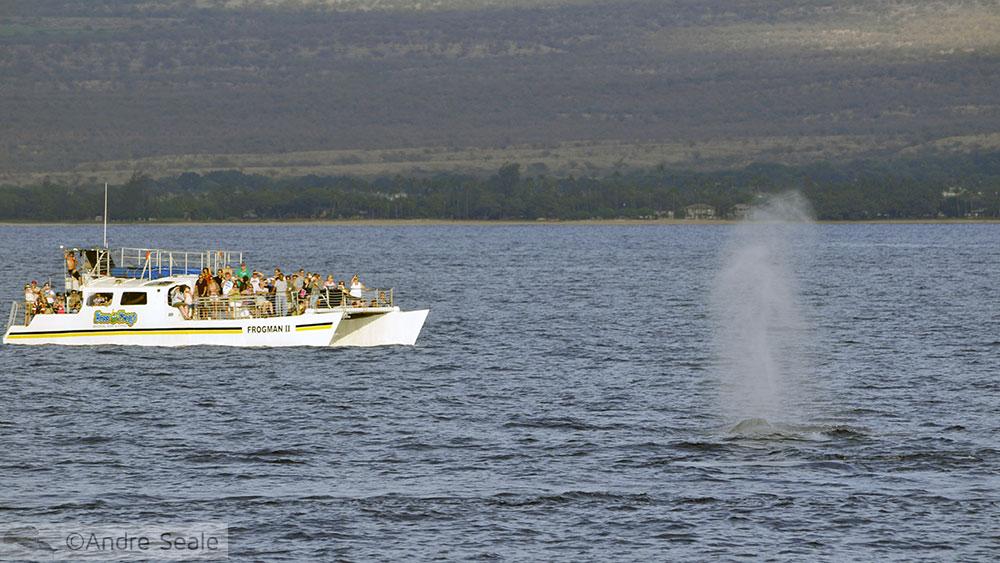 Borrifo da Baleia em Maui