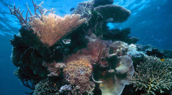 Sexta Sub: criopreservação de corais