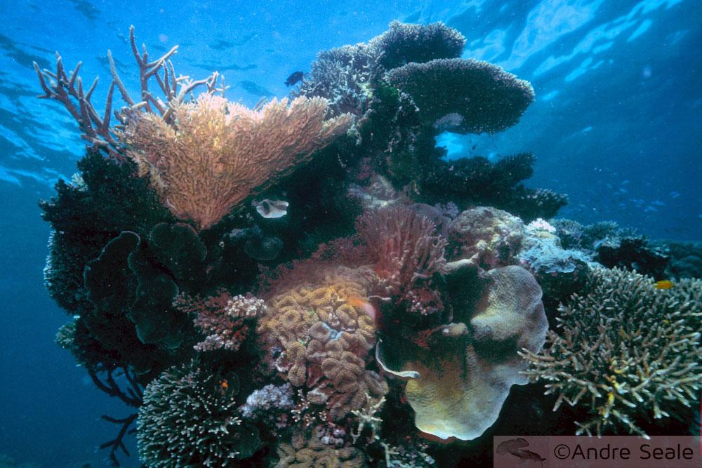 Criopreservação de corais - Grande Barreira de Corais Australiana