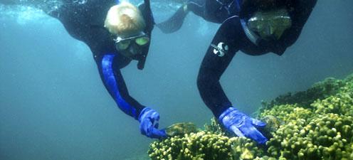 Cientistas de coral em trabalho de campo no Havaí