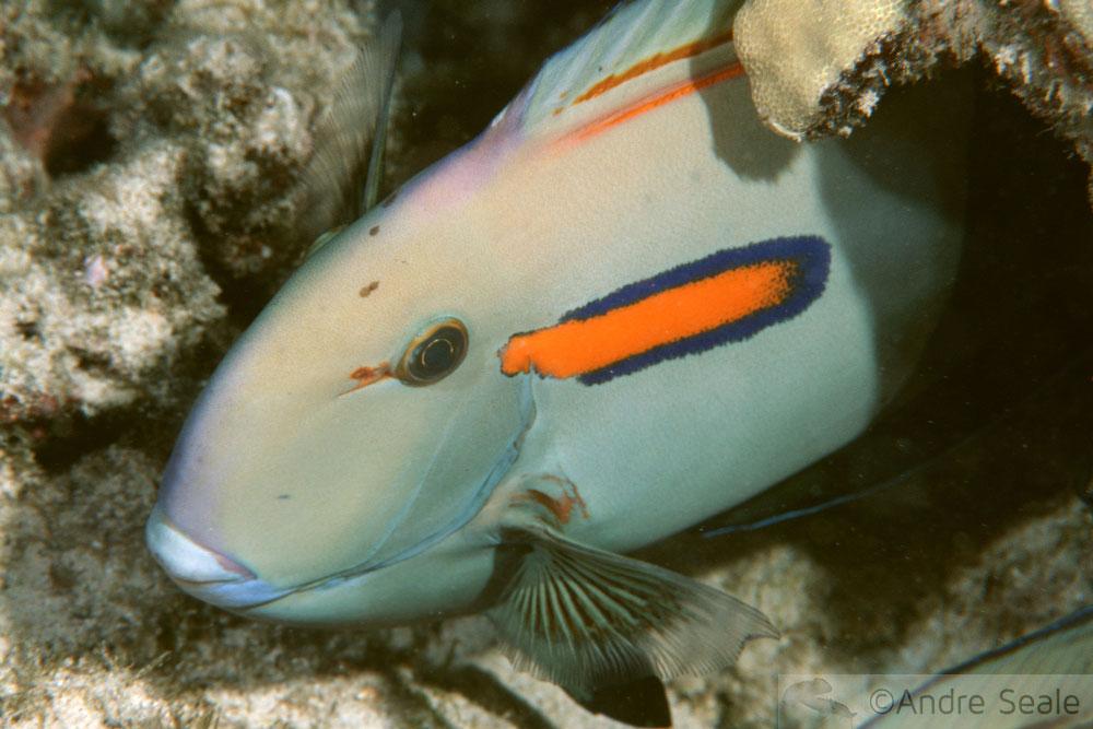 Snorkel no Havaí