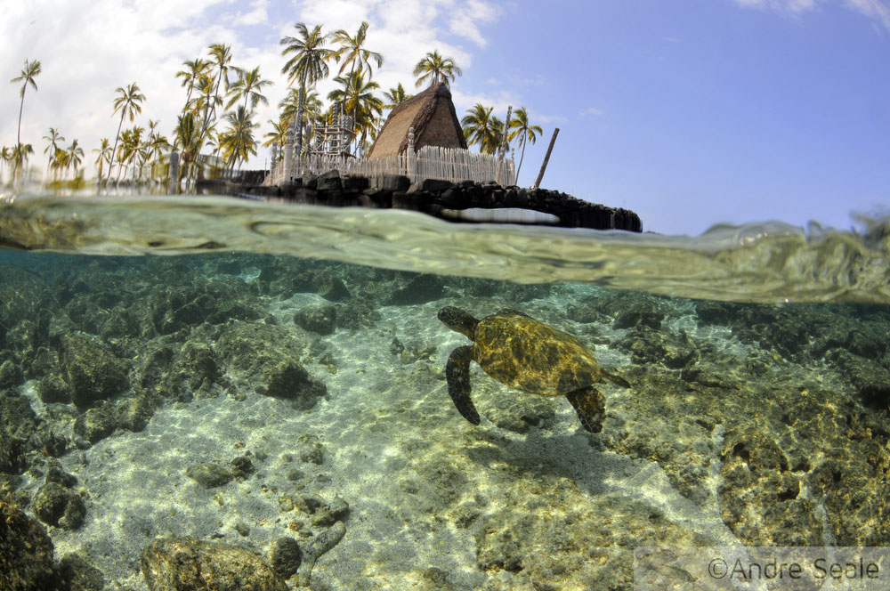Snorkel no Havaí - Honaunau