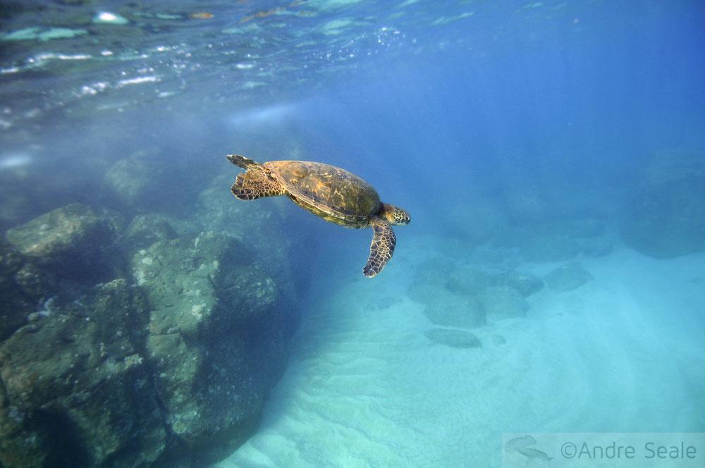 Snorkel no Havaí - Waimea Bay