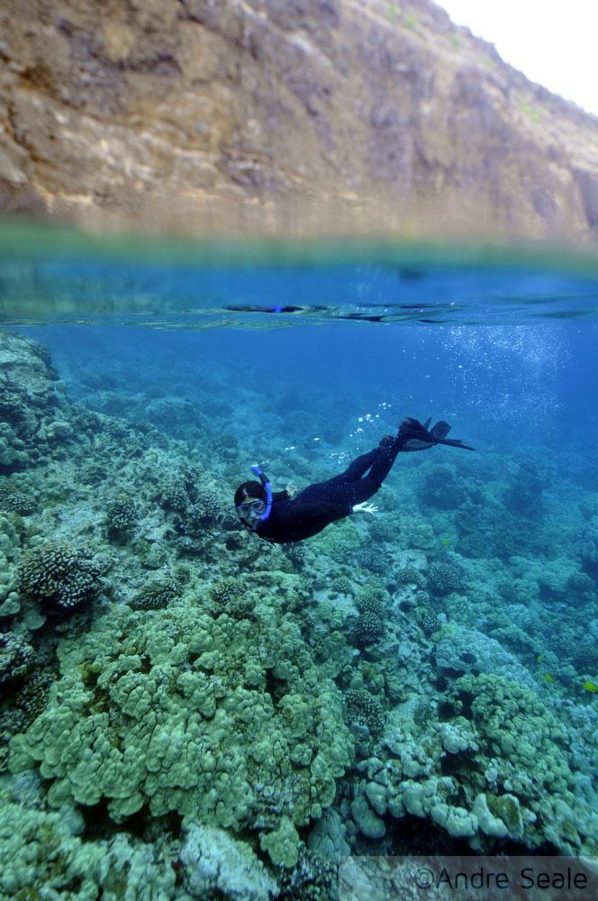 Snorkel em Kealakekua Bay
