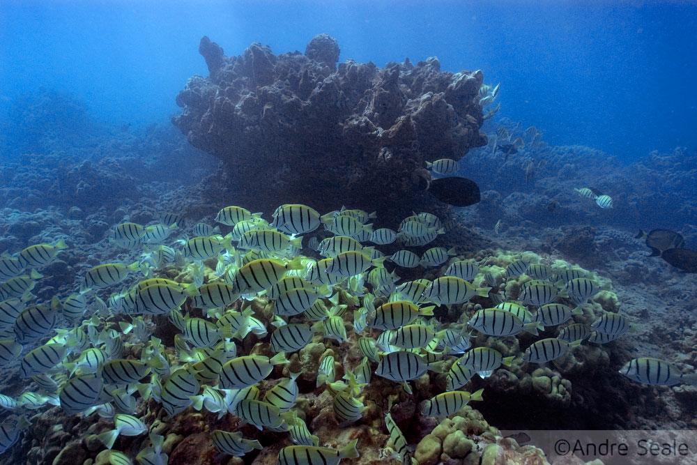 Snorkel no Havaí - Hanauma Bay