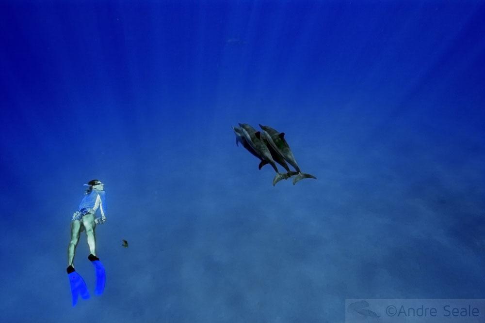 Snorkel - Baía de Kealakekua - Big Island