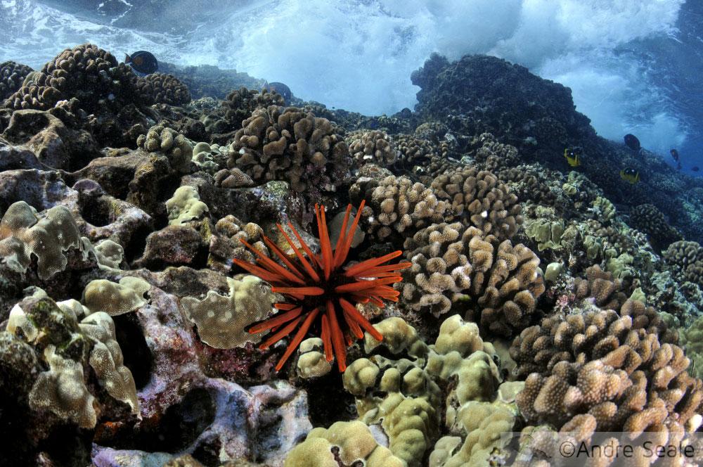 Snorkel no Havaí - Molokini