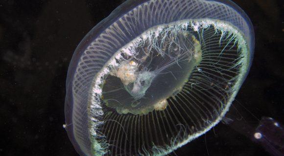 Sexta Sub: ainda medusa