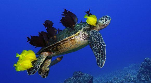 Nos bastidores do Shell Wildlife Photographer of the Year