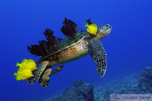 Turtle grooming - ©Andre Seale - ArteSub