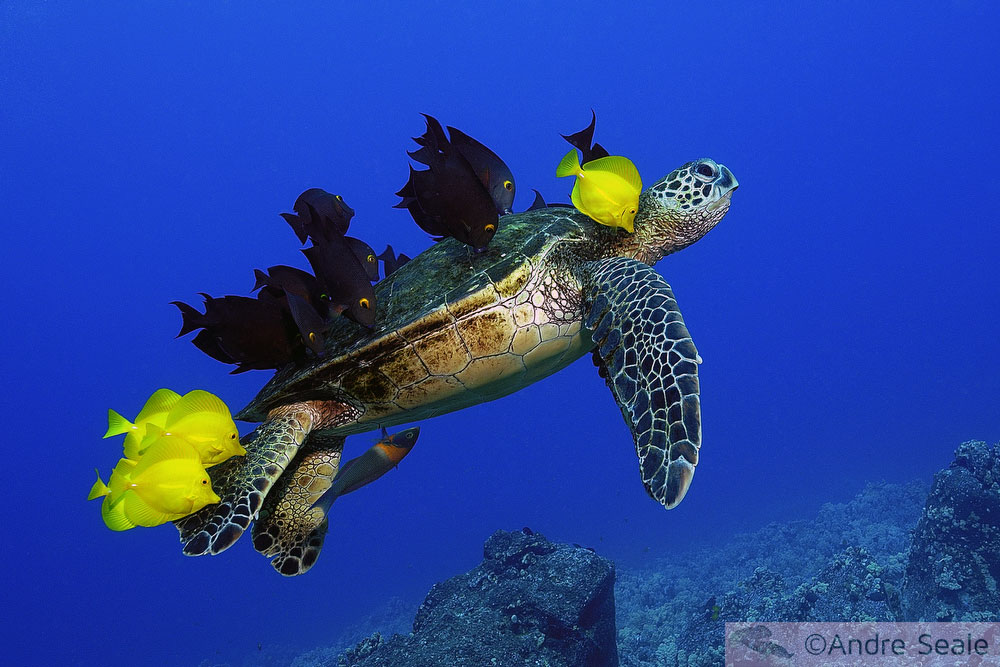 Turtle Grooming - André Seale - Wildlife Photographer of the Year 2006