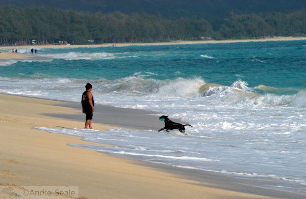 Três praias havaianas entre as mais bonitas dos EUA