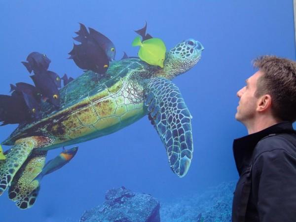 """Turtle Grooming"" na Exposição Wild Planet - Londres - Inglaterra"