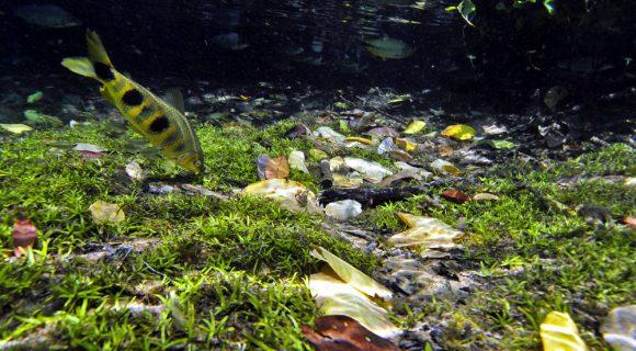 Sexta Sub: peixe fora d'água