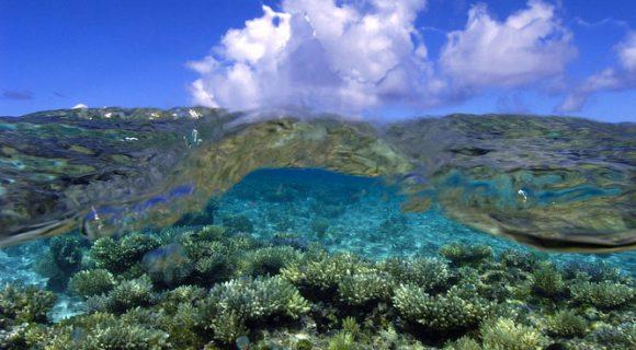 Sexta Sub: Dia Mundial dos Oceanos 2012