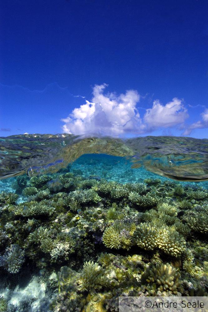 Dia Mundial dos Oceanos 2012 - recife de coral tropical