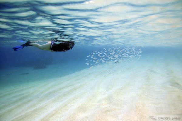 Havaí mergulho - Waimea Bay