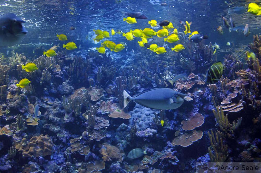 Aquário - Maui Ocean Center