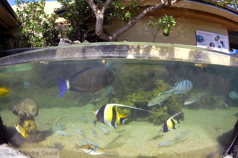 Aquário de Maui