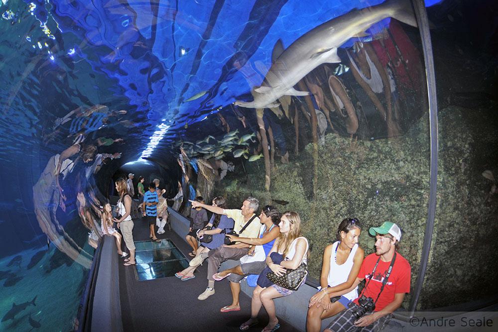 Túnel principal - Maui Ocean Center