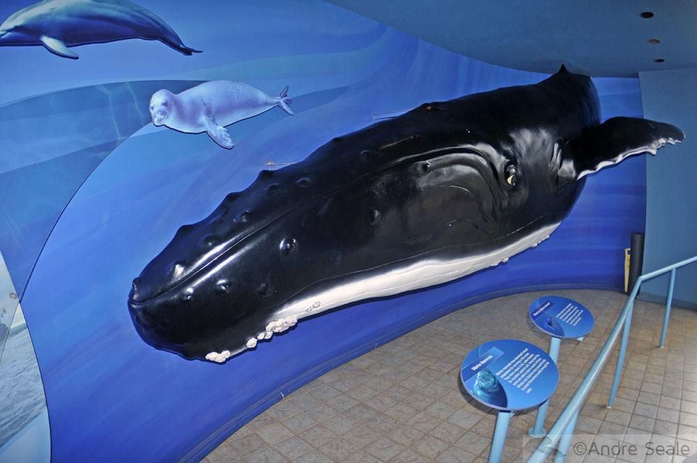 Modelo de  Baleia jubarte - Maui Ocean Center