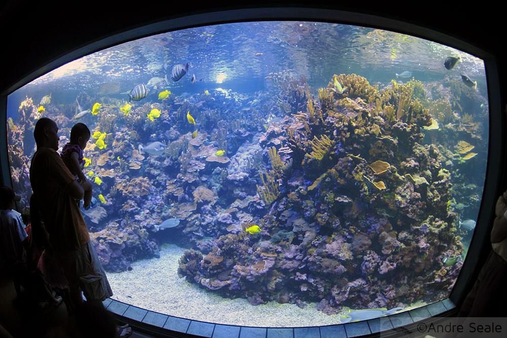 Aquário do Maui Ocean Center