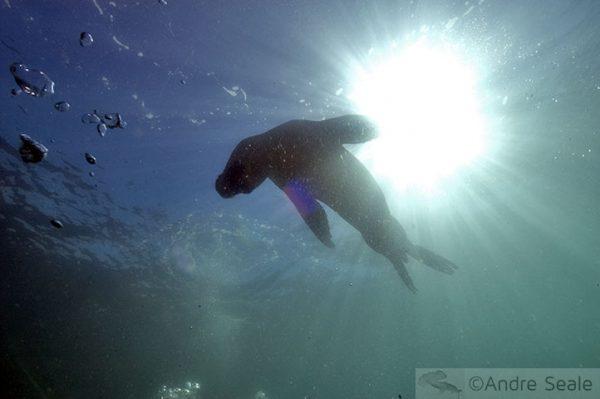 Argentina - leões marinhos