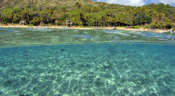 Sexta Sub: domingão de aloha