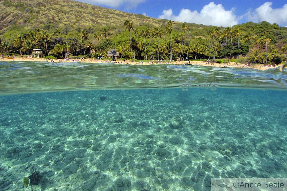 Domingão de Aloha