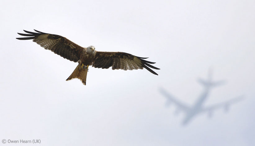 Flight paths - Owen Hearn - Wildlife Photographer of the Year 2012