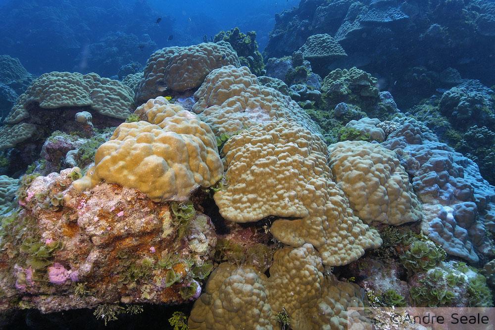 Recife de coral saudável - Planeta aquecido