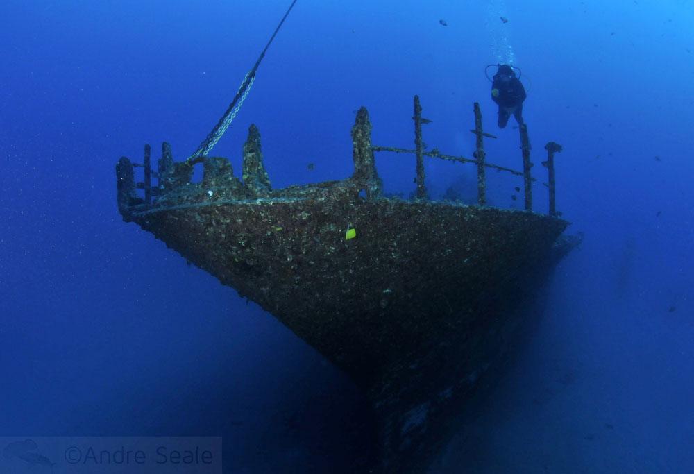 mergulho no Sea Tiger
