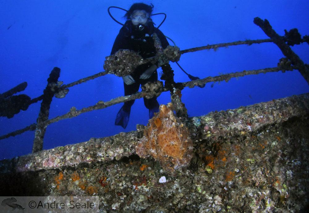 Polvo no Sea Tiger