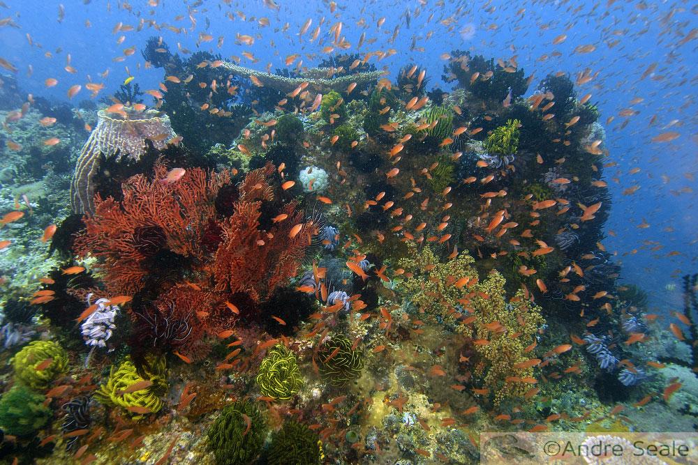 Um Sonho carnavalesco - biodiversidade recife de coral