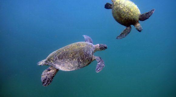 Sexta Sub: dia mundial da tartaruga