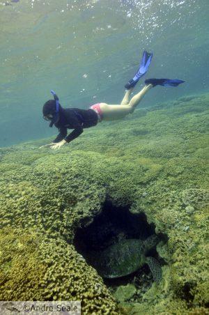 Snorkel com tartaruga - Havaí