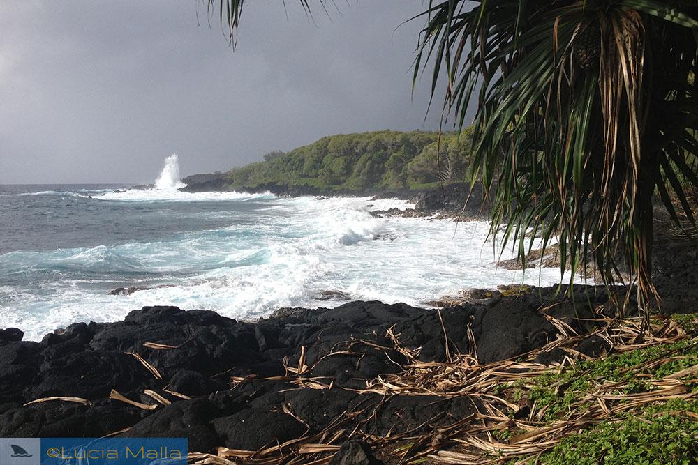 Costa de Puna-Pahoa - Big Island - Havaí