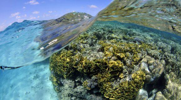 Sexta Sub: véspera do dia dos oceanos