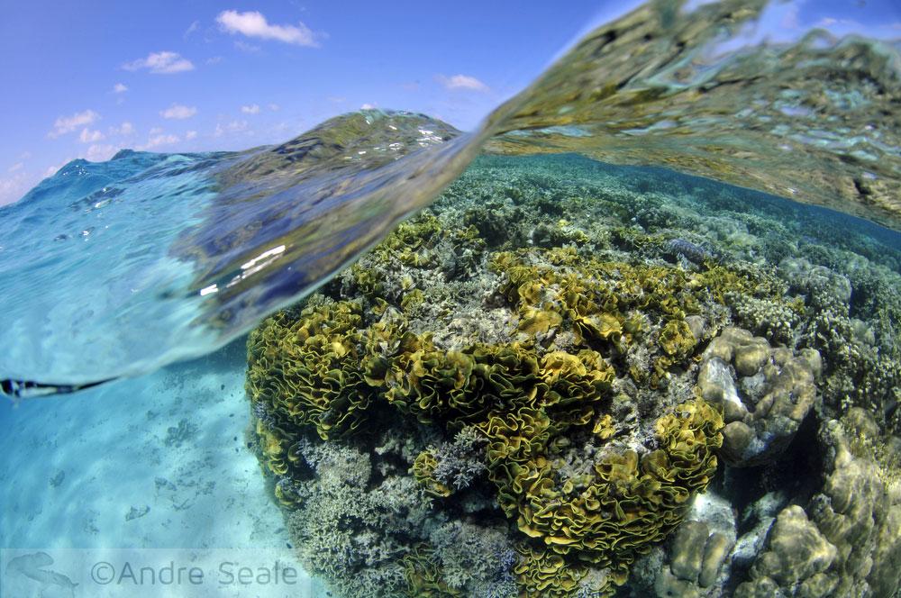 Véspera do dia dos Oceanos - Sexta Sub
