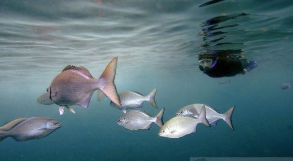 Sexta Sub: snorkel na Na Pali Coast
