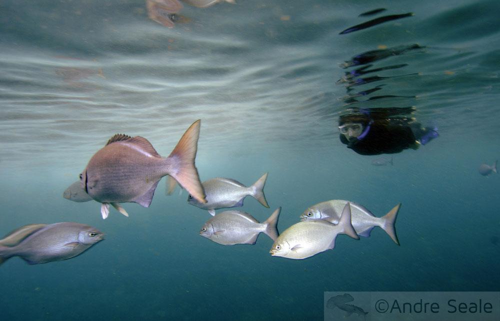 Snorkel na Na Pali Coast - Kauai