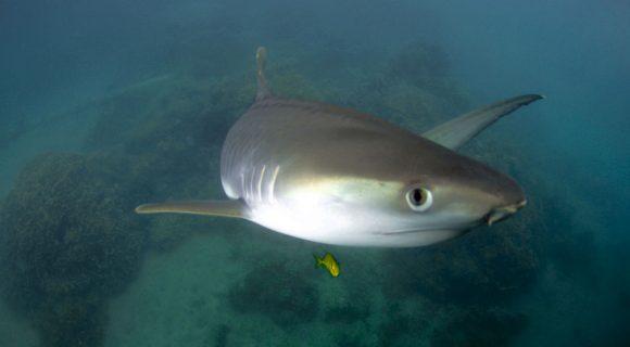 Sexta Sub: Shark Week está chegando