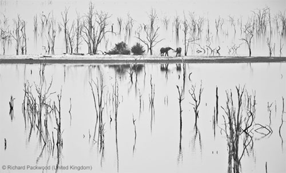 WPY2013 - Richard Packwood - The greeting