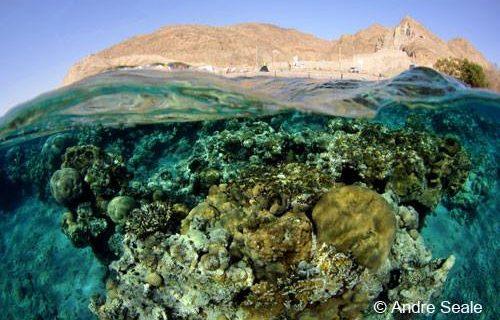 Sexta Sub: coral de Eilat